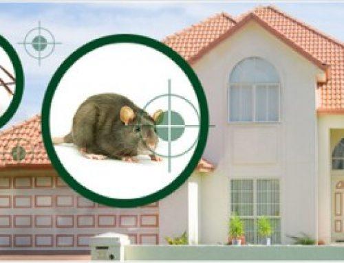 شركة مكافحة القوارض دبي |0507036261| ابادة الحشرات