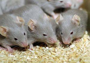 شركة مكافحة الفئران الشارقة